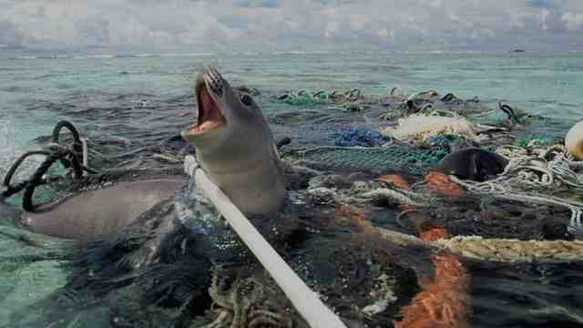 rceni-contaminacion-marina-plastico-