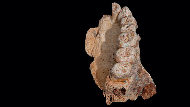 rceni-israel-fosil-mas-antiguo-fuera-de-africa