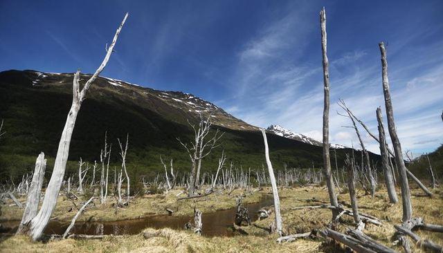"""RCENI-Científicos advierten del """"daño irreversible"""" que sufre el planeta"""