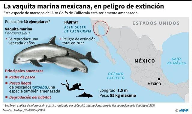 RCENI-La pérdida de la vaquita marina en los ecosistemas