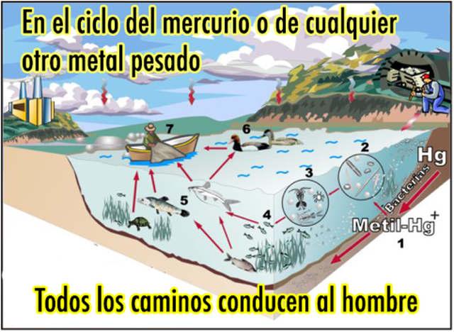rceni-el-mercurio-contaminante-de-nuestros-oceanos