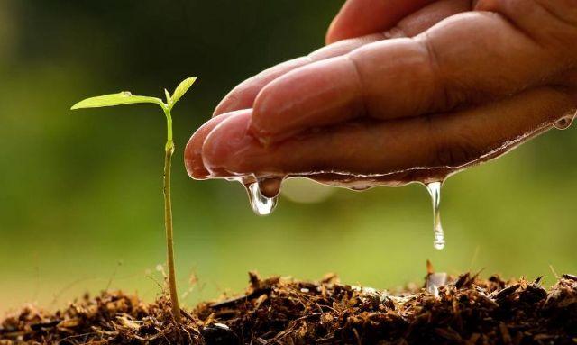 rceni - Reforestación en Panamá - miles-participaron
