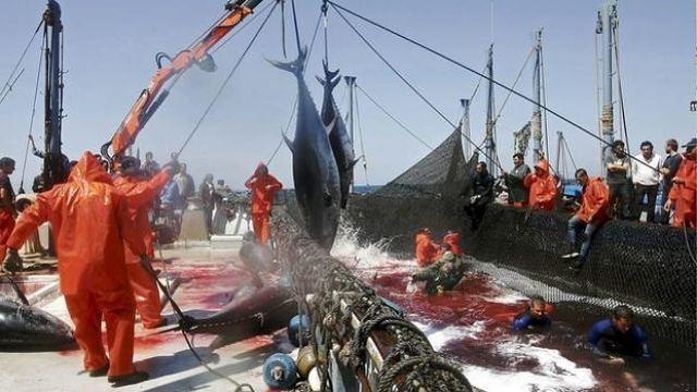 rceni -Guerras pesqueras -entre-países-