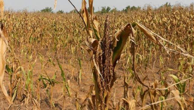 rceni - Sequía afecta a unas 115,000 familias -en-toda-Centroamerica-