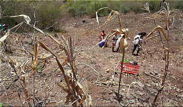 rceni - Sequía en Centroamérica -países- piden -ayuda -internacional- por -sus- efectos-