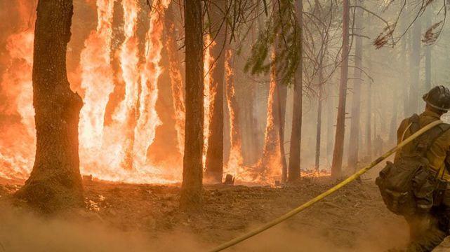 rceni -Incendios forestales en California-son-los-mayores-en-toda-su-historia-