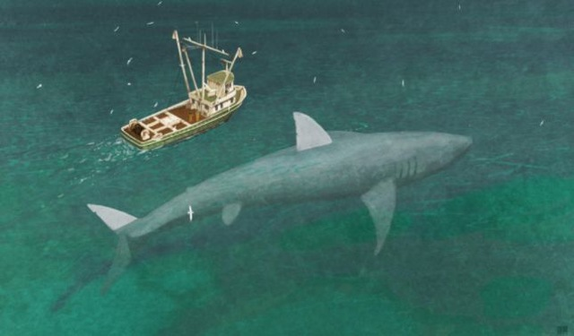 rceni - Megalodón -restos -de- este -tiburón -gigante -son-exhibidos-en- Panamá -