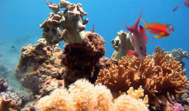 rceni - Panamá una nueva especie - de -coral- blando-es-descubierta-