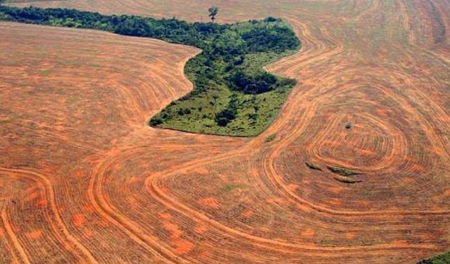 rceni - Amazonia brasileña -sufre -la -peor -deforestación -en -una -década-