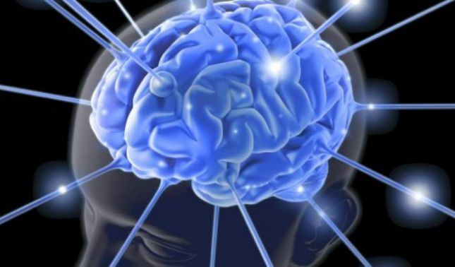 rceni - Núcleo endo-restiforme -zona -desconocida- en -cerebro- humano -descubren-