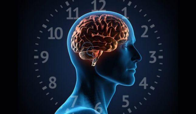 rceni - Ritmo circadiano- nuevo- método -contra- uno- de- los -cánceres -más -peligrosos-