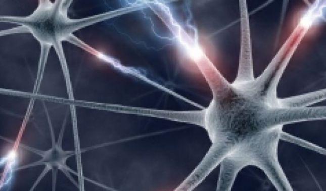 rceni - Logran leer la mente de ratas - gracias -a -mapas- cerebrales-