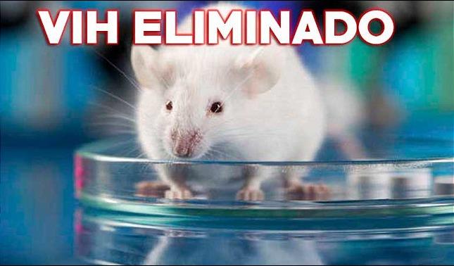 rceni - Eliminan el VIH en ratones -vivos- infectados- es- la- primera- vez -que- lo -hacen-