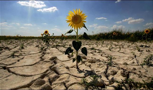rceni - Corredor Seco - Centroamericano -debe -ser –abordado- en-Cumbre –del- Clima-