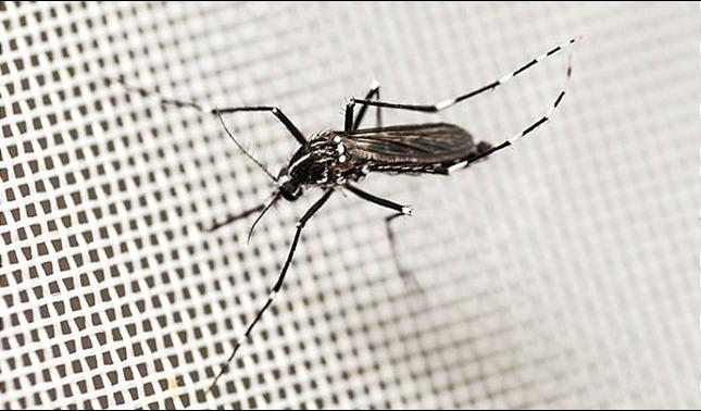 rceni - Alerta epidemiológica - por -dengue- en- Latinoamérica- y -el -Caribe-