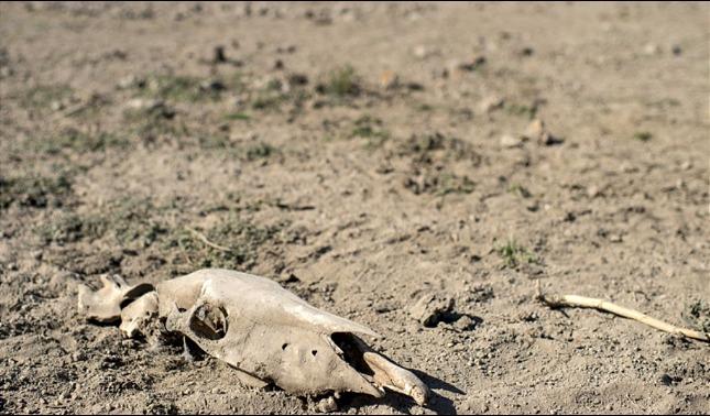 rceni - Sequía en Chile - es -la -mas- catrastrofica- en- más- de- medio -siglo-