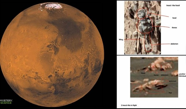 rceni - Insectos en Marte -Entomólogo -dice- haberlos -descubiertos -