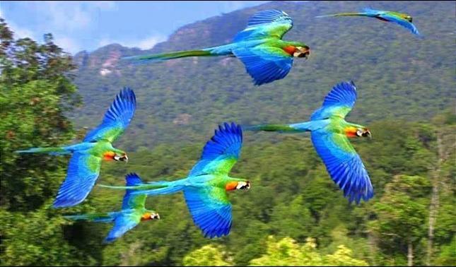 rceni - Observación de aves -Honduras- se- promueve- en- festival- de- estados- unidos -