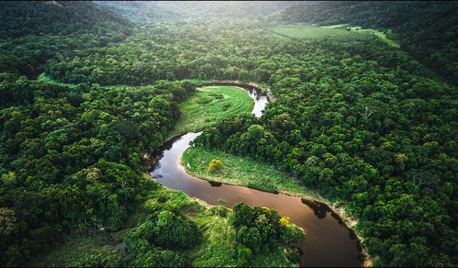 rceni - Deforestación en el amazonas -alertan- que -podria- convertirla- en -sabana-