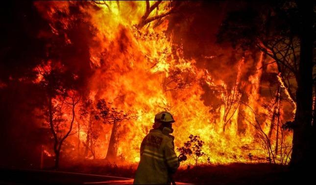 rceni - Incendios en Australia -la -inmensa- devastacion- en -cifras-