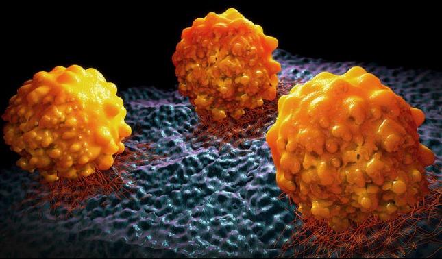rceni - La metástasis -cientificos -descubren- como -es -que- se -propaga-