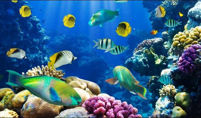 rceni - Corales -Costa- Rica- será- sede -de- 1ra -reunión -mundial- sobre- restauración-