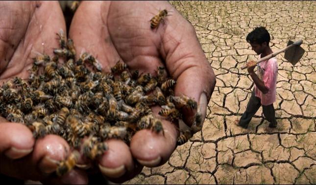 rceni -Insectos -alertan -sobre -su- posible -desaparición- lo- que -sería -una-catastrófe-