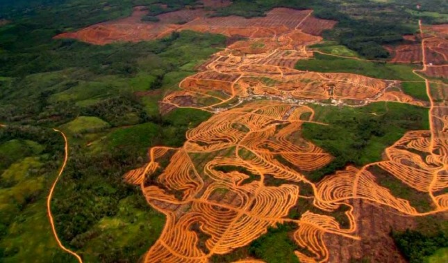 rceni - Deforestación -de- la -Amazonía -en- abril- fue- la- mayor- en- 10 -años-