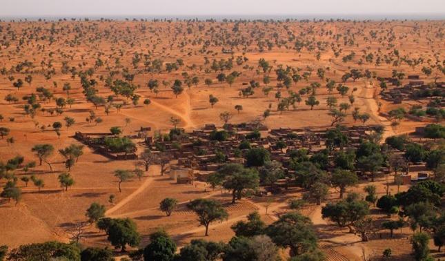 rceni - árboles -increíble- hallazgo- de -cientos -de- millones -en -el -desierto -del -Sahara-