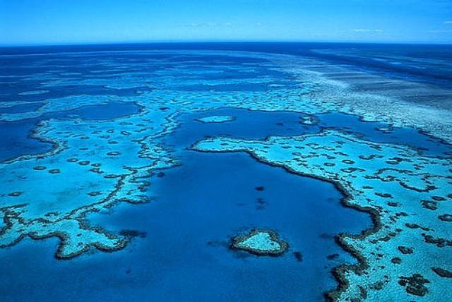 rceni - Gran barrera de coral -reduce- su -población- en -más- de- la- mitad- en- 25- años-