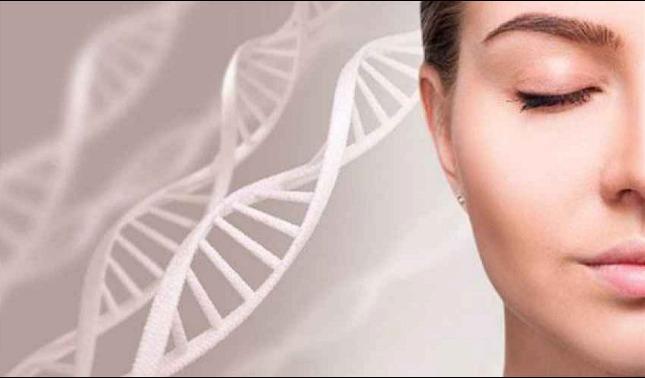 rceni - Células madre musculares -que -regeneran -los -músculos -hasta- la -vejez-