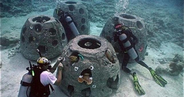 rceni - Arrecifes artificiales -un -paso- hacia- la -recuperación -marina- en- Costa- Rica-