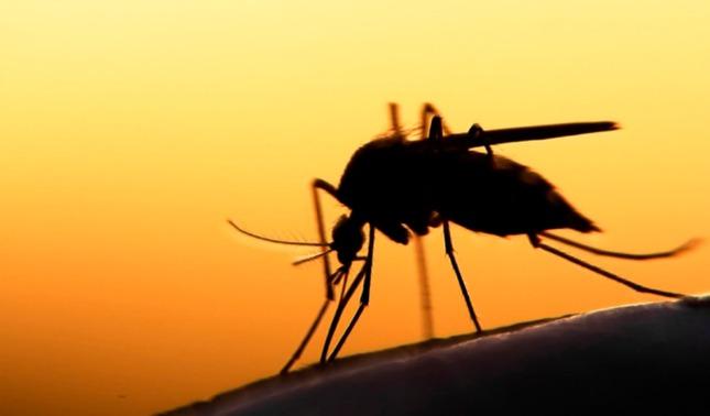 rceni - La malaria -es- erradicada -completamente- de- El- Salvador -