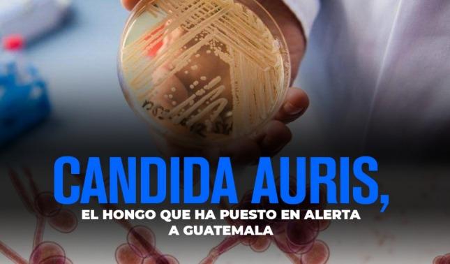 rceni - Hongo candida auris - dispara- alerta -epidemiológica- en- Guatemala-