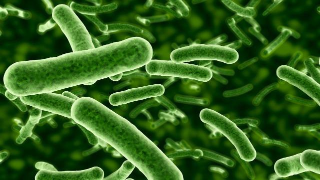 rceni - Bacteria -que- recurre- a -la- mecánica -cuántica- para -sobrevivir- es -descubierta-