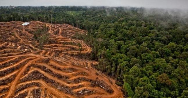 rceni - Selvas tropicales -estudio -alerta -que -estan- siendo -acabadas- por- humanos-