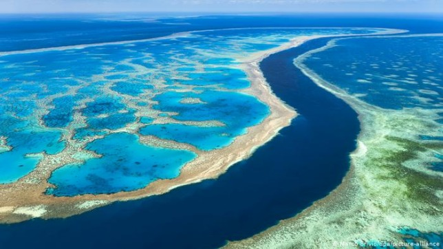 rceni - La gran barrera de coral -en- autralia -prolongan -su- existencia- por- 20 -años -