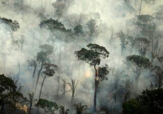 rceni - Amazonía brasileña -emitió -más- CO2- del- que -absorbió- en- la -última -década-