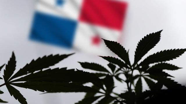rceni - Cannabis -como -uso -medicinal -es -aprobada -en -Panama-