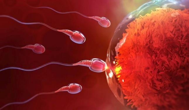 rceni - Fertilidad -los -hombres -están -produciendo -menos -espermatozoides-